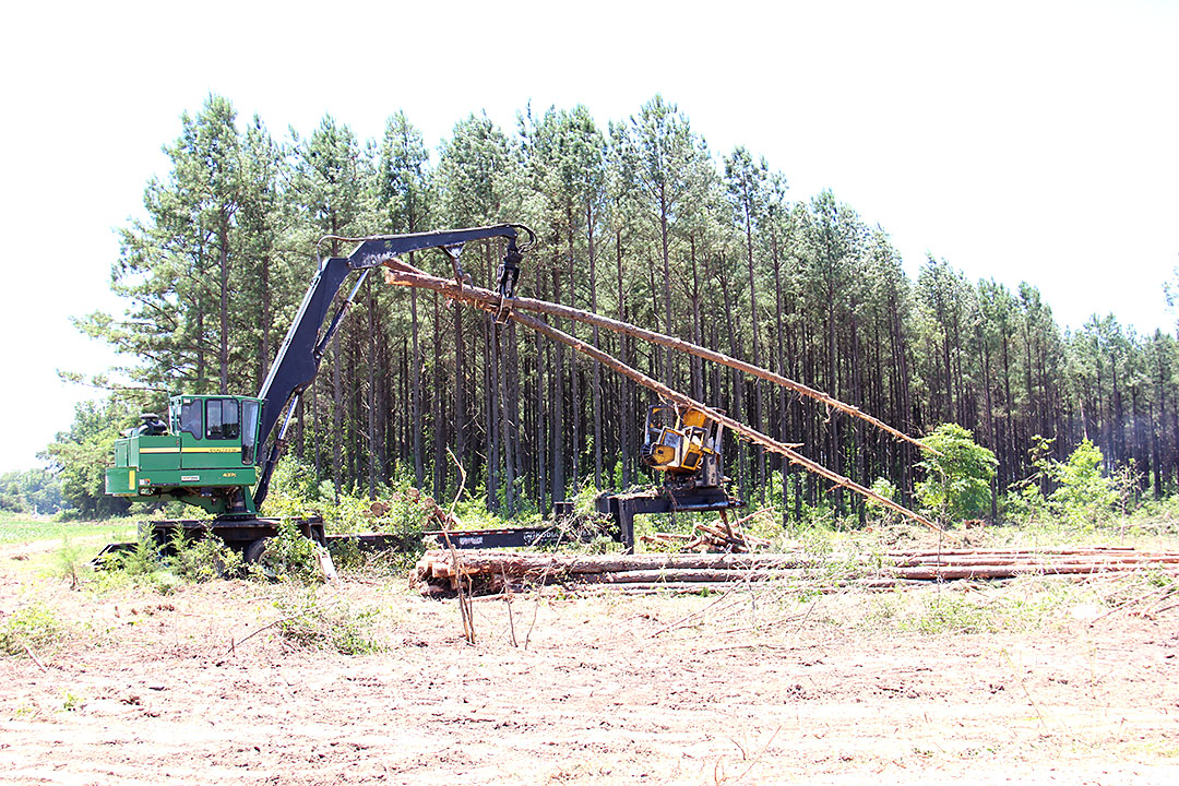 timber harvesting Timber harvesting timber harvesting with over 20 years of experience in the forests of northern new england, we have the skills and ability to sustainably harvest timber.