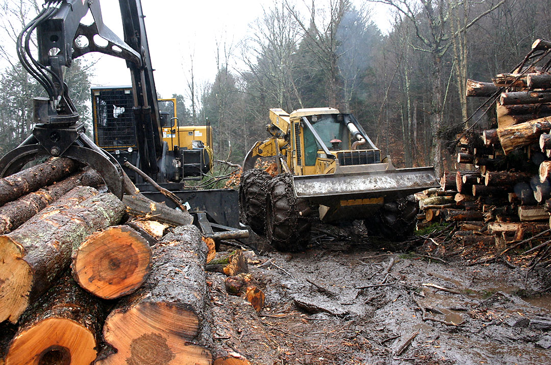 timber harvesting What is your timber worth | selling timber | reporting timber harvest income to  the irs | best management practices (bmps) for timber harvesting | more.